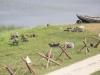 1944-5-oktoober-nidislahing-maasil-69
