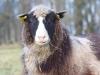 lammas2