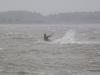 kaur_surf_toomalouka_002_raulvinni