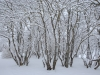 30.12.2014_talvenauding_26.ja 27. dets._2014_GALERII-13