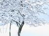30.12.2014_talvenauding_26.ja 27. dets._2014_GALERII-2