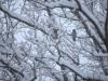 30.12.2014_talvenauding_26.ja 27. dets._2014_GALERII-23