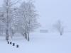 30.12.2014_talvenauding_26.ja 27. dets._2014_GALERII-4