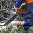 Läinud reedel Ida-Virumaal toimunud 45. metsanduse kutsevõistlustel oli edukaim saarlane RMK Saaremaa metskonna praaker Sulev Tänav, kes pälvis metsameistrite arvestuses II koha. RMK Saaremaa metskonna metsaülem Marko Trave ütles, et […]