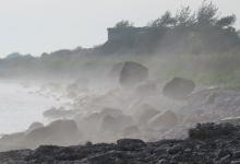 Kui meri õitseb