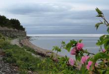 Suvi Saaremaal … Undva pank