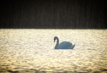 Nonni järve kaunitar